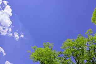 杜の都 仙台 西公園より新緑を愛でるの写真素材 [FYI01261993]