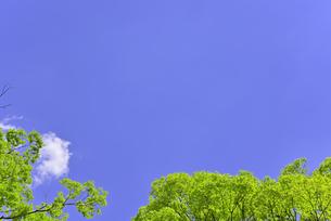 杜の都 仙台 西公園より新緑を愛でるの写真素材 [FYI01261994]