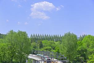 杜の都 仙台 西公園より新緑を愛でるの写真素材 [FYI01261995]