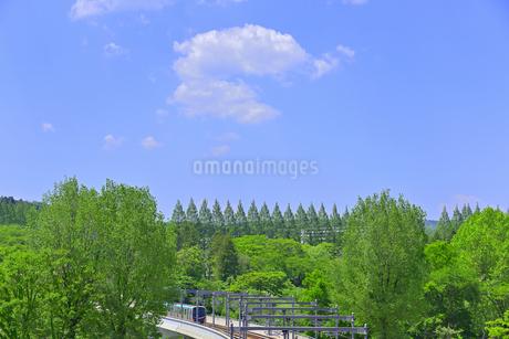 杜の都 仙台 西公園より新緑を愛でるの写真素材 [FYI01261996]