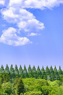 杜の都 仙台 西公園より新緑を愛でるの写真素材 [FYI01261999]