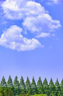 杜の都 仙台 西公園より新緑を愛でるの写真素材 [FYI01262000]