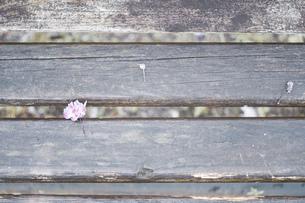木製 ベンチ クロースアップ 接写 花の写真素材 [FYI01262185]