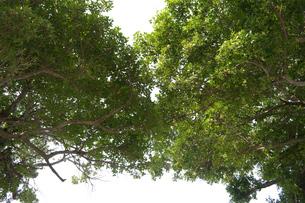 緑豊かな木々の写真素材 [FYI01262256]