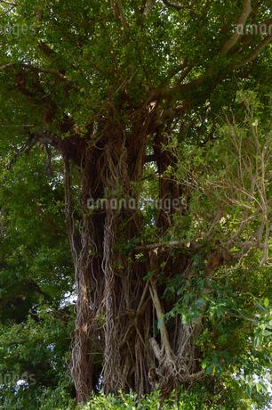 緑豊かな木々の写真素材 [FYI01262262]
