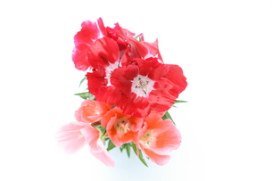 イロマツヨイグサの花束の写真素材 [FYI01262421]