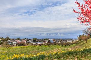 春の箕輪城からみた風景の写真素材 [FYI01262443]