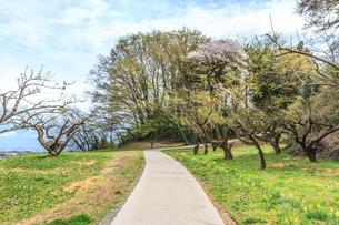 春の箕輪城の風景の写真素材 [FYI01262445]