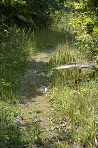 森に続く夏の田舎の一本道の写真素材 [FYI01262463]