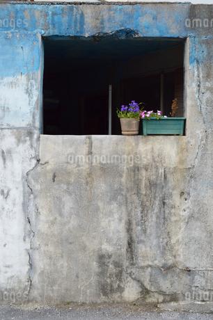 窓枠が無い古びた壁の建物とかわいい鉢植えの写真素材 [FYI01262470]