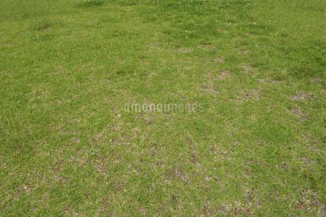 ところどころ剥げているいる芝生の写真素材 [FYI01262701]
