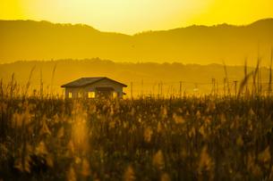 すすき畑と太陽と家屋の写真素材 [FYI01262737]
