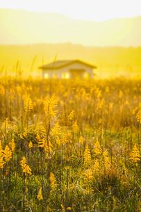 すすき畑と太陽と家屋の写真素材 [FYI01262738]