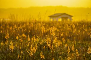 すすき畑と太陽と家屋の写真素材 [FYI01262739]
