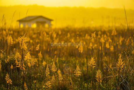 すすき畑と太陽と家屋の写真素材 [FYI01262740]