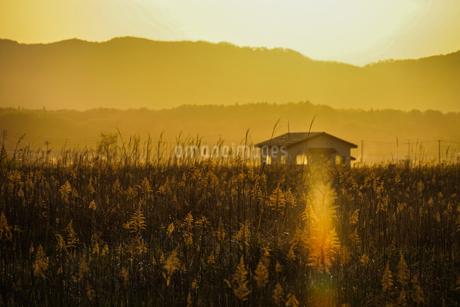 すすき畑と太陽と家屋の写真素材 [FYI01262741]
