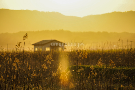 すすき畑と太陽と家屋の写真素材 [FYI01262742]