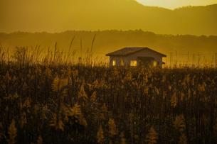すすき畑と太陽と家屋の写真素材 [FYI01262743]