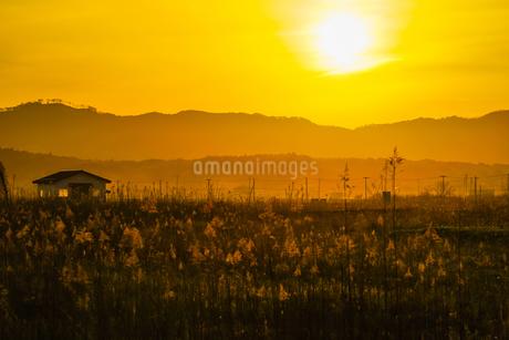 すすき畑と太陽と家屋の写真素材 [FYI01262746]