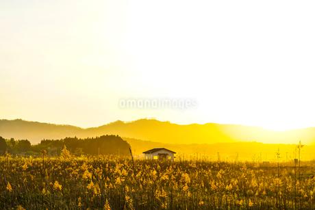 すすき畑と太陽と家屋の写真素材 [FYI01262747]