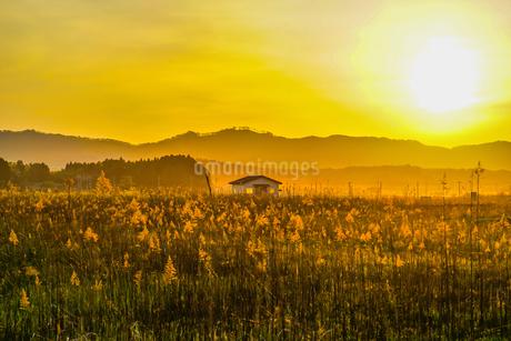 すすき畑と太陽と家屋の写真素材 [FYI01262750]