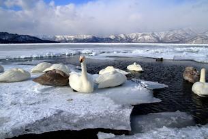 厳寒の北海道凍りつく屈斜路湖の写真素材 [FYI01262851]