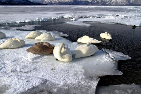 厳寒の北海道凍りつく屈斜路湖の写真素材 [FYI01262853]