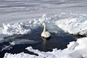厳寒の北海道凍りつく屈斜路湖の写真素材 [FYI01262862]