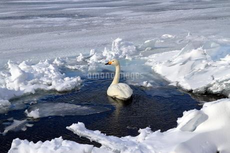 厳寒の北海道凍りつく屈斜路湖の写真素材 [FYI01262863]