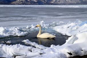 厳寒の北海道凍りつく屈斜路湖の写真素材 [FYI01262864]