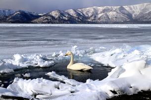 厳寒の北海道凍りつく屈斜路湖の写真素材 [FYI01262865]