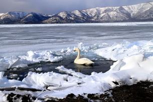 厳寒の北海道凍りつく屈斜路湖の写真素材 [FYI01262866]