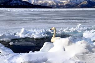 厳寒の北海道凍りつく屈斜路湖の写真素材 [FYI01262868]
