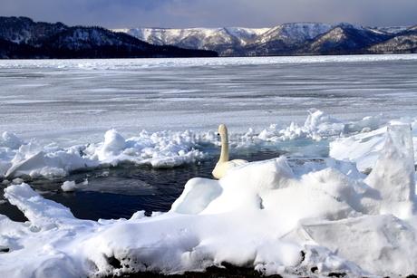 厳寒の北海道凍りつく屈斜路湖の写真素材 [FYI01262869]