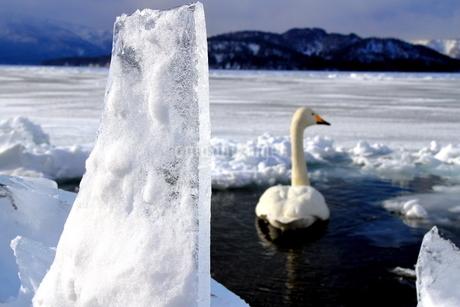 厳寒の北海道凍りつく屈斜路湖の写真素材 [FYI01262870]