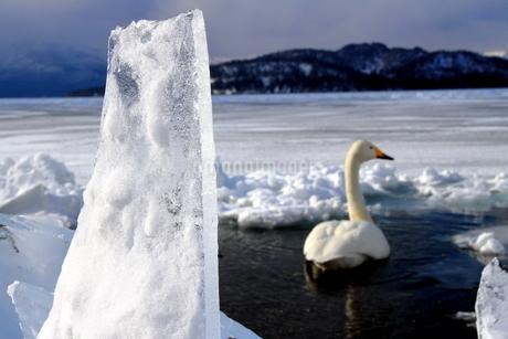厳寒の北海道凍りつく屈斜路湖の写真素材 [FYI01262871]