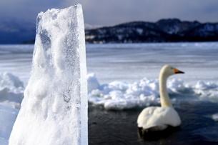 厳寒の北海道凍りつく屈斜路湖の写真素材 [FYI01262872]