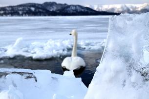 厳寒の北海道凍りつく屈斜路湖の写真素材 [FYI01262873]
