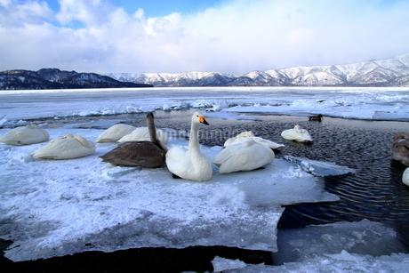 厳寒の北海道凍りつく屈斜路湖の写真素材 [FYI01262882]