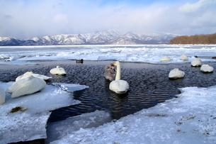 厳寒の北海道凍りつく屈斜路湖の写真素材 [FYI01262883]