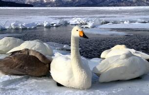 厳寒の北海道凍りつく屈斜路湖の写真素材 [FYI01262885]