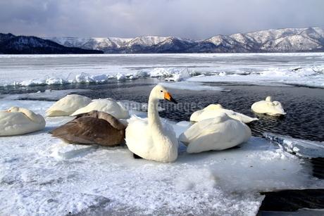 厳寒の北海道凍りつく屈斜路湖の写真素材 [FYI01262886]