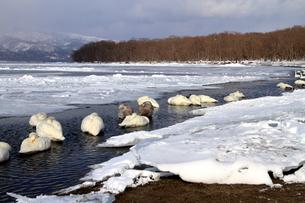 厳寒の北海道凍りつく屈斜路湖の写真素材 [FYI01262888]
