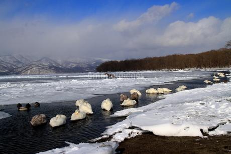 厳寒の北海道凍りつく屈斜路湖の写真素材 [FYI01262890]