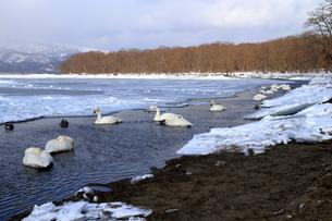 厳寒の北海道凍りつく屈斜路湖の写真素材 [FYI01262892]