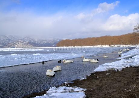 厳寒の北海道凍りつく屈斜路湖の写真素材 [FYI01262893]