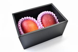 完熟したマンゴーの写真素材 [FYI01262993]