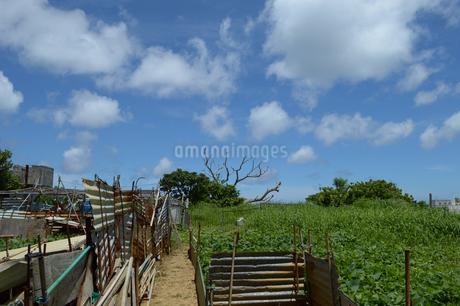 晴天の田舎道と畑の写真素材 [FYI01263051]