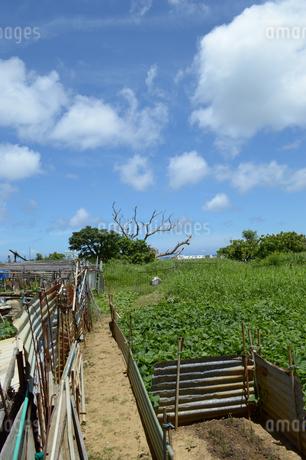 晴天の田舎道と畑の写真素材 [FYI01263052]