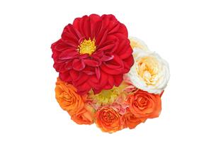 ダリアと薔薇の花束の写真素材 [FYI01263145]